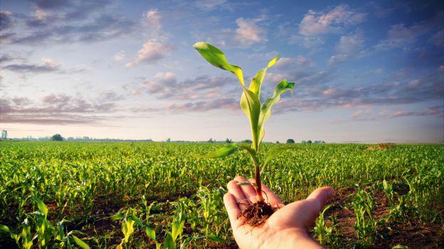 Agricoltura: in Italia 15% superficie coltivata a biologico